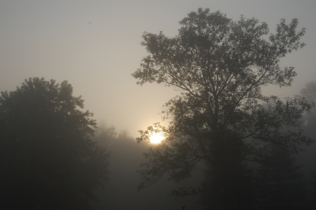 fog, sunrise