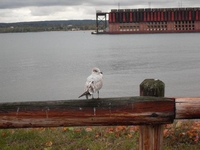 Iron Docks, MI