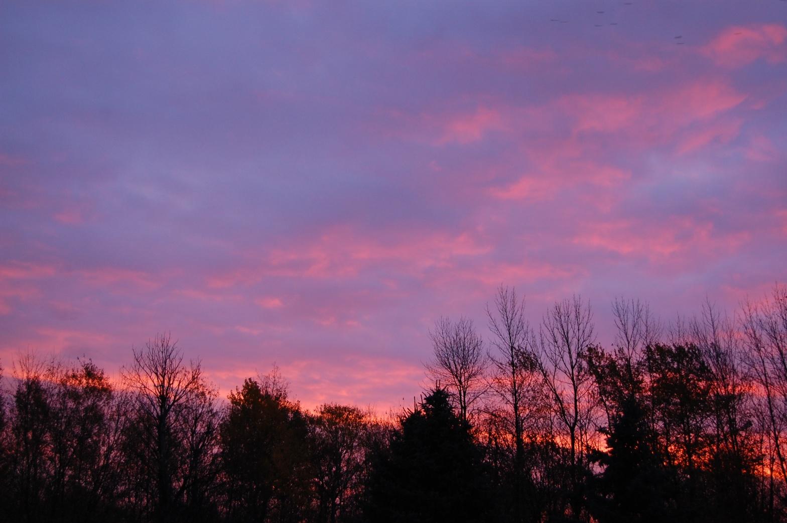 sunrise behind pine trees